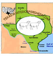 www.TexasWhitedorperSheep.com- Home of the Grand Champion